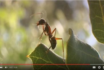 Vídeos sobre los invertebrados