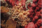 Recursos para descubrir el mundo submarino