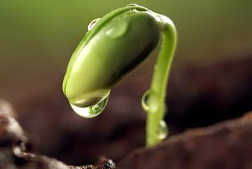 Recursos para descubrir el origen de la vida en la Tierra
