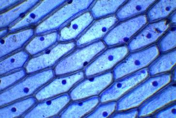 Recursos para conocer las células y sus tipos