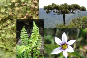 Recursos para conocer el reino vegetal
