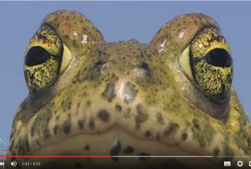 Recursos para conocer a los anfibios