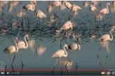 Recursos y aplicaciones para conocer a las aves