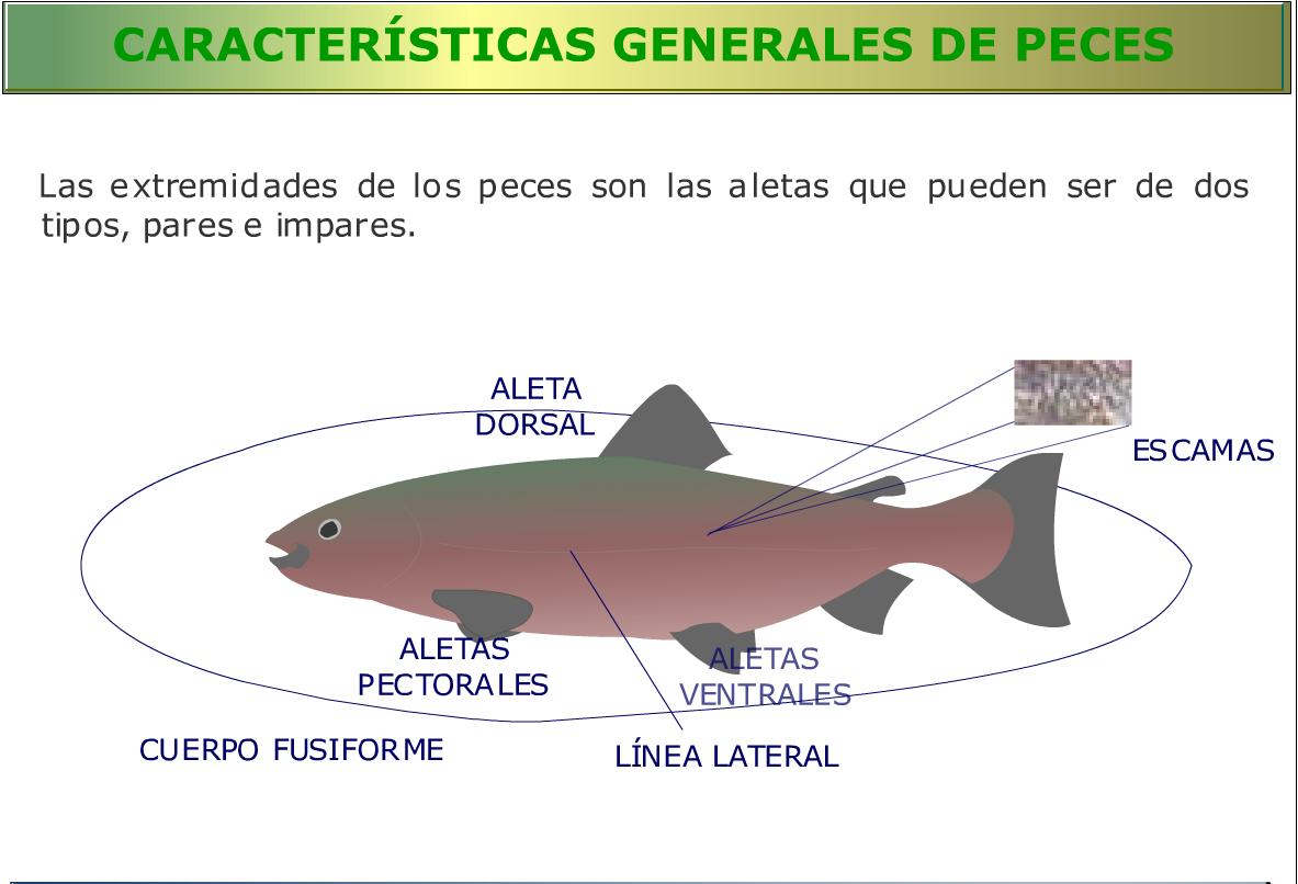 Recursos para conocer a los peces eniac for Como se cultivan los peces