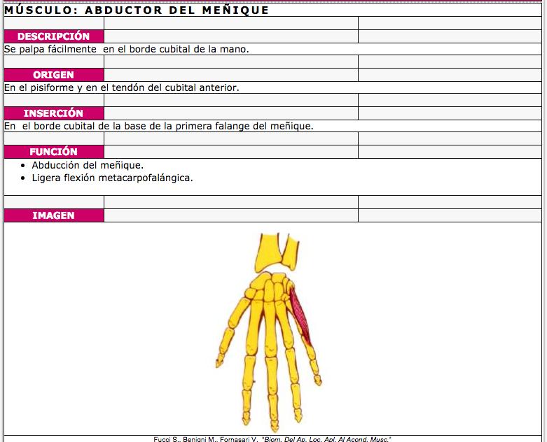 Recursos para conocer los músculos del cuerpo humano | Eniac