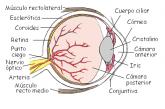 Recursos para conocer los sentidos de la vista y del oído